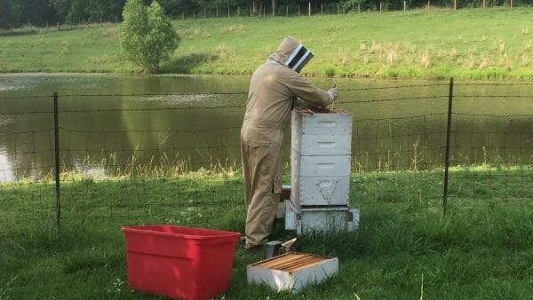 Pulling Beehive Frames | How to Extract Honey With a Hand-Crank Extractor | Faithful Farmwife