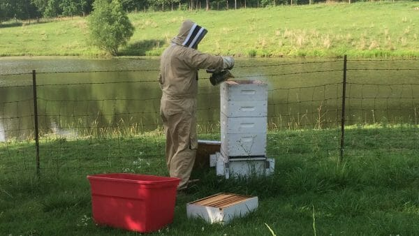 Smoking a Beehive | How to Extract Honey With a Hand-Crank Extractor | Faithful Farmwife