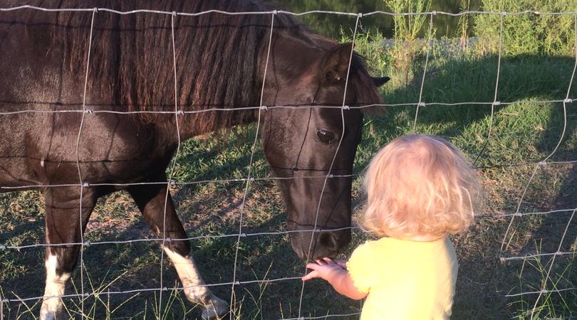 Simple Homemade Horse Treats