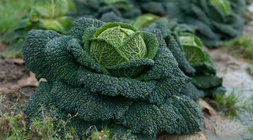10 Frugal Gardening Tips to Save Money This Season