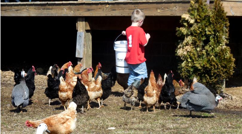 Kids' Chores around the Farm & Home