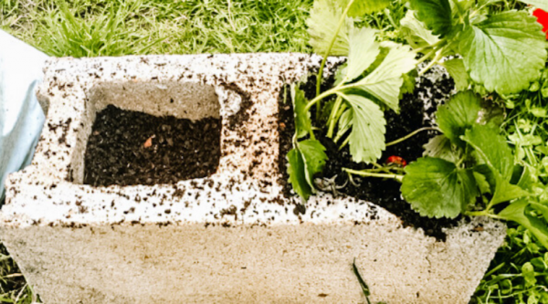 DIY Repurposed Planting Containers | Faithful Farmwife