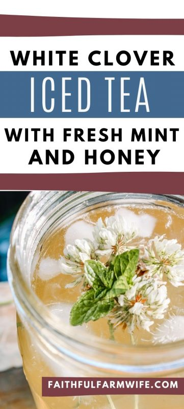 Add a refreshing twist to your summertime sweet tea with this white clover iced tea with mint & honey! #summertime #icedtea #whiteclover #foraging #eattheweeds