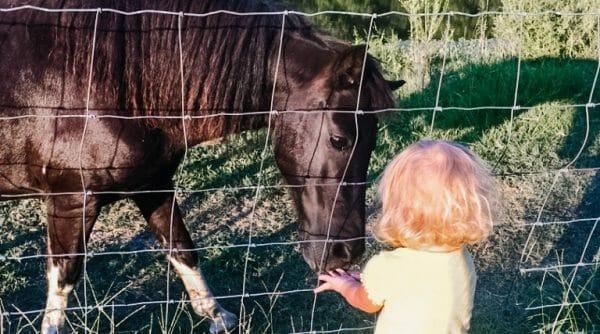 Simple Homemade Horse Treats   Faithful Farmwife