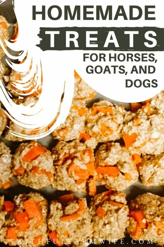 Make homemade horse treats for the equine members of your family with this simple recipe! It only takes 5 ingredients and about 20 minutes! #horsetreats #horses #equine #diy #livestocktreats