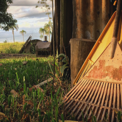 30+ Basic Homestead Skills to Start Learning Today