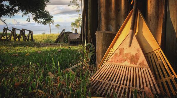 30+ Basic Homestead Skills to Start Learning Today | Faithful Farmwife