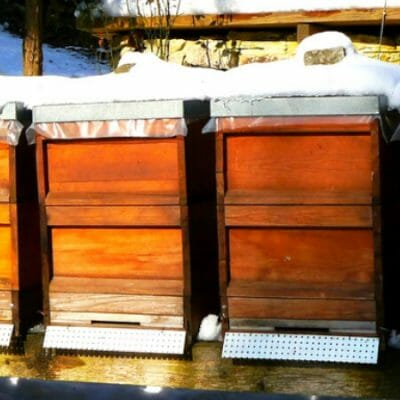 5 Things to Know About Overwintering Honeybees