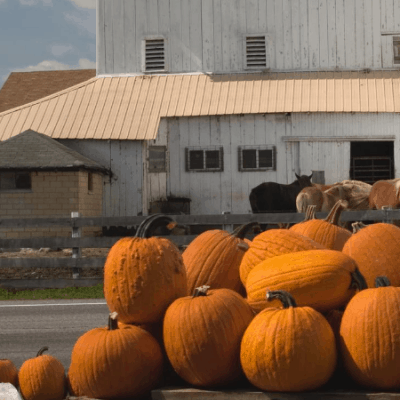 22 of the Best Fall Farm Fest Activities, Food, & Decorations