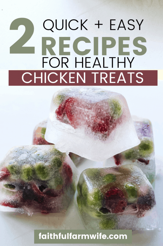 Try these homemade chicken treats (2 ways) for your backyard birds. These treats are perfect for warming up in the cold weather or cooling off in the summer! #chickens #chickentreats #homemade #livestock #poultry