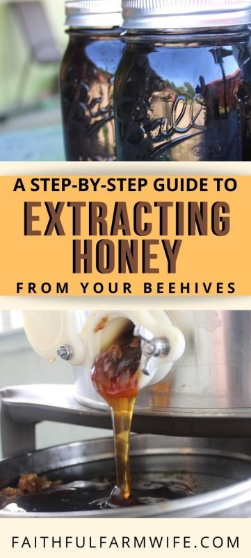 Interested in beekeeping or just love eating honey? Check out this complete guide that will teach you to extract honey at home using a hand-crank extractor! #beekeeping #extracthoney #rawhoney #eatlocal #honeyextraction #honey #beekeeping