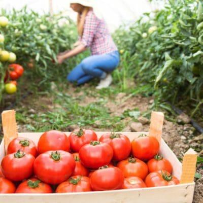 15 Beginner Gardening Tips + Resources