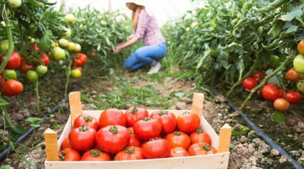 15 Beginner Gardening Tips + Garden Planning Resources | Faithful Farmwife