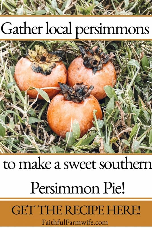 Add variety to your fall dessert menu with this sweet Southern Persimmon Pie! #PersimmonPie #FallDessert #SweetTreat #SouthernDessert #FallPie #PieRecipe