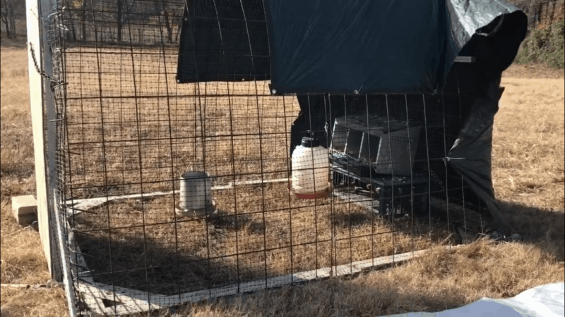 How to Winterize a Chicken Tractor | Faithful Farmwife