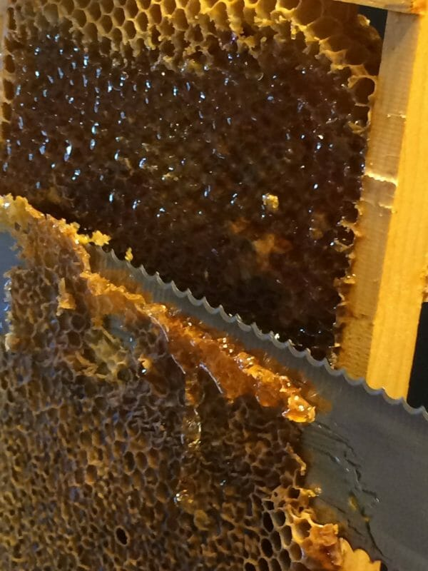 Removing Cap from Honey | How to Extract Honey With a Hand-Crank Extractor | Faithful Farmwife