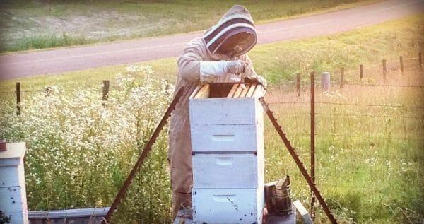 Honey Extraction- 2016 Recap