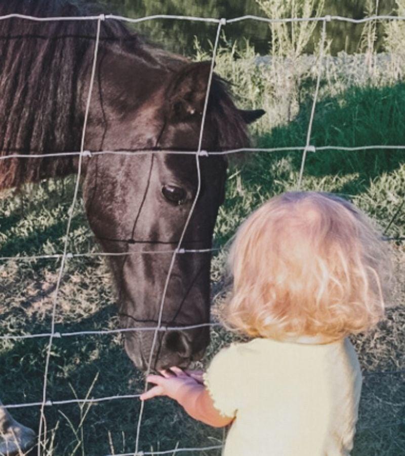 Girl feeding a treat to a pony | How to Make Simple Homemade Horse Treats | Mama on the Homestead