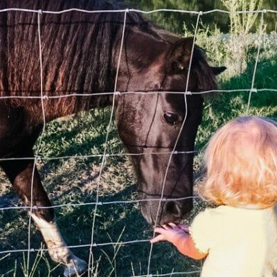 How to Make Simple Homemade Horse Treats