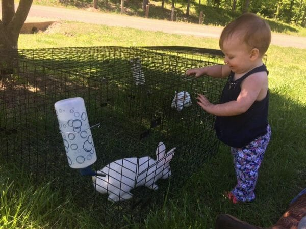 Little girl looking at a rabbit in a cage | 10+ of the Best Bunny Birthday Party Activities & Food