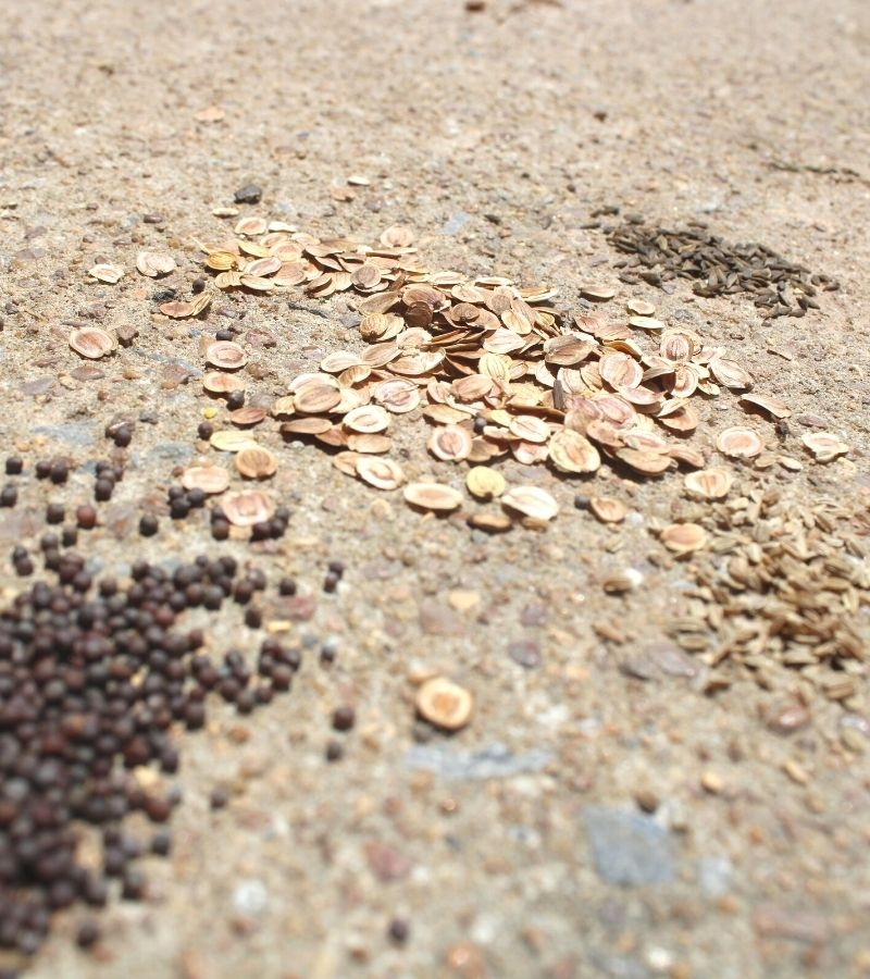 Vegetable seeds spread out across countertop | Mama on the Homestead