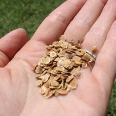 What You Need to Know Before Starting a Personal Seed Bank