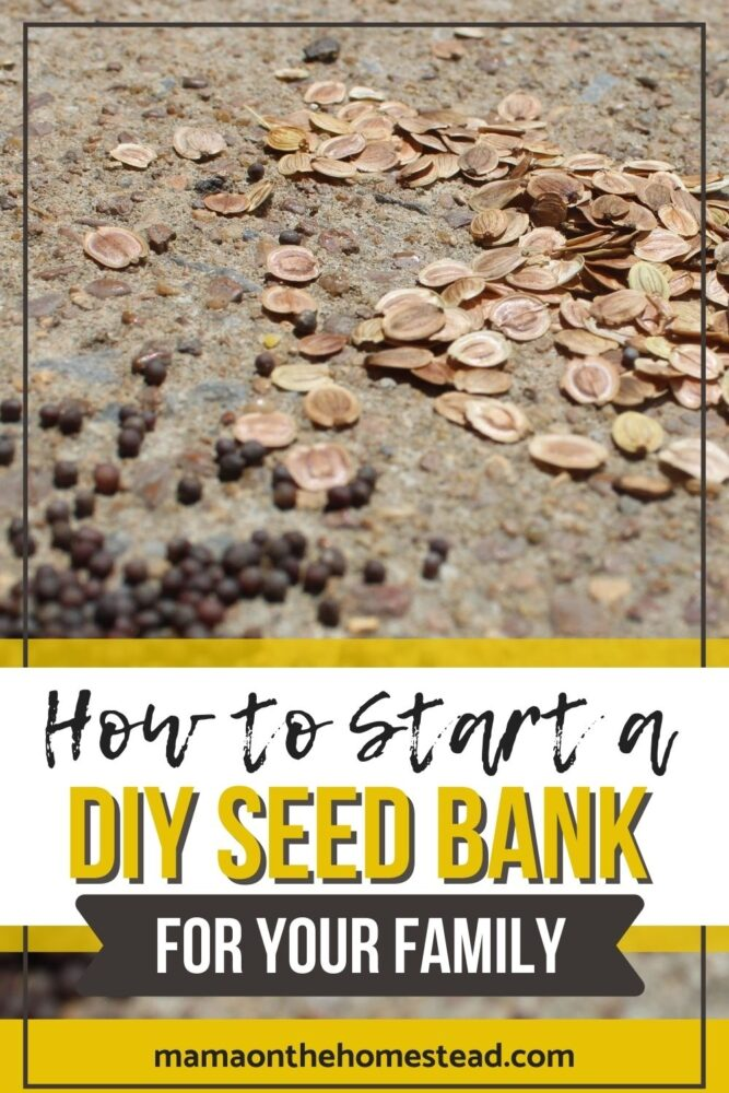 Vegetable seeds spread out on a countertop. Words: How to Start a DIY Seed Bank for Your Family | Mama on the Homestead