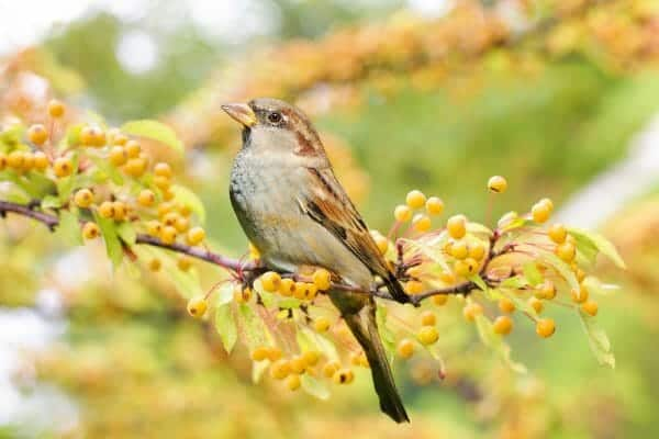 Bird Watching | Faithful Farmwife