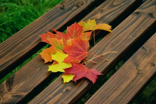 Leaf Journal | 12 Fall Nature Walk Activities + Fall Book Selection | Faithful Farmwife