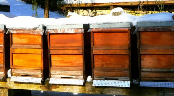 5 Things You Need to Know About Overwintering Honeybees | Faithful Farmwife