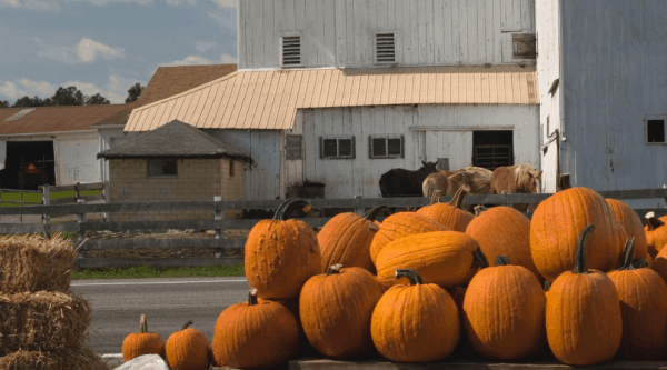 22 of the Best Fall Farm Fest Activities, Food, & Decorations | Faithful Farmwife