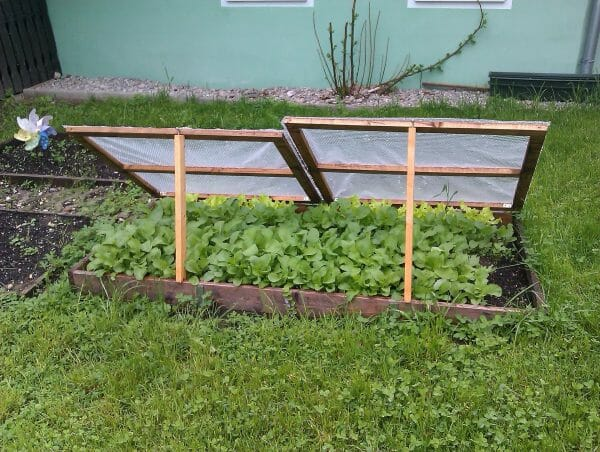 Cold Frame   20+ Winter Homestead Essentials You Need to Stock   Faithful Farmwife