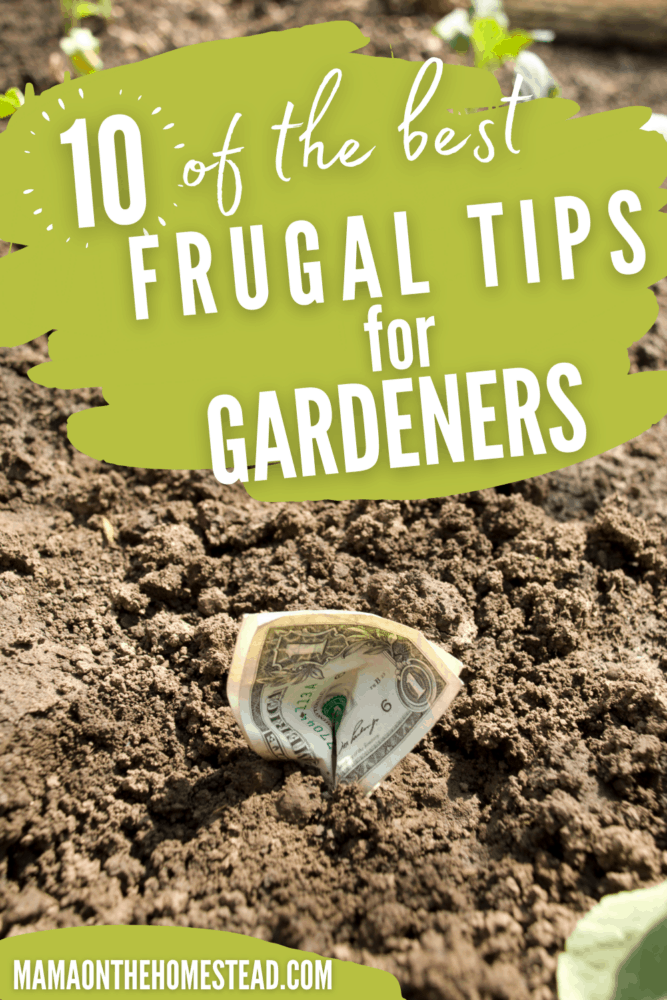 Image of dollar bills in garden soil. Words: 10 of the Best Frugal Tips for Gardeners Pin Image