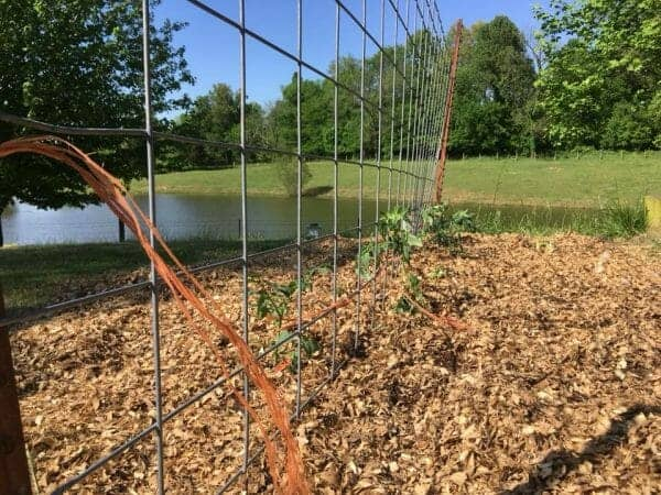 Cattle Panel Garden Trellis | 70+ Practical Homesteading Essentials You Need for Self-Sufficiency | Faithful Farmwife