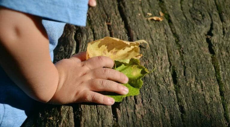 40+ Fall Montessori Activities, Crafts, Toys, & More