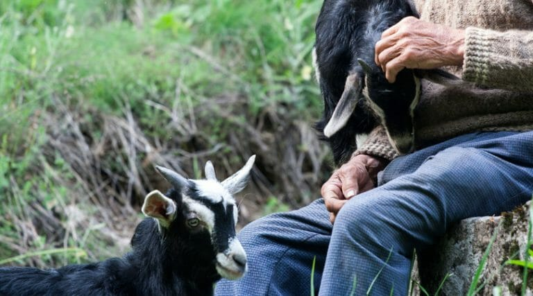 Keeping a Small Herd Goat Records