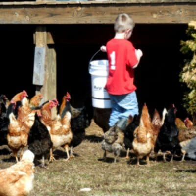 9 Simple Tips for Implementing Farm Chores for Kids