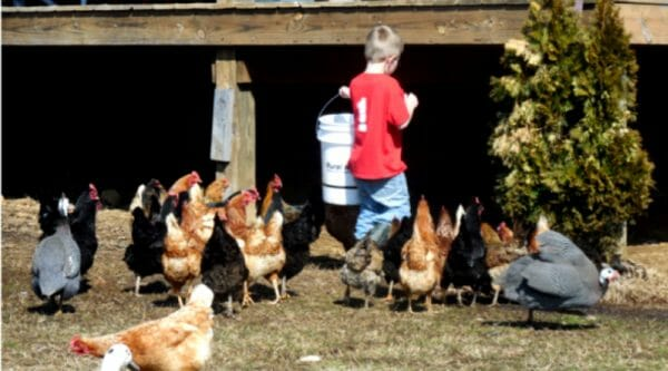 9 Simple Tips for Implementing Farm Chores for Kids | Faithful Farmwife
