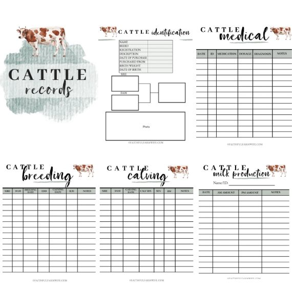 The Cattle Record Book | Mama on the Homestead