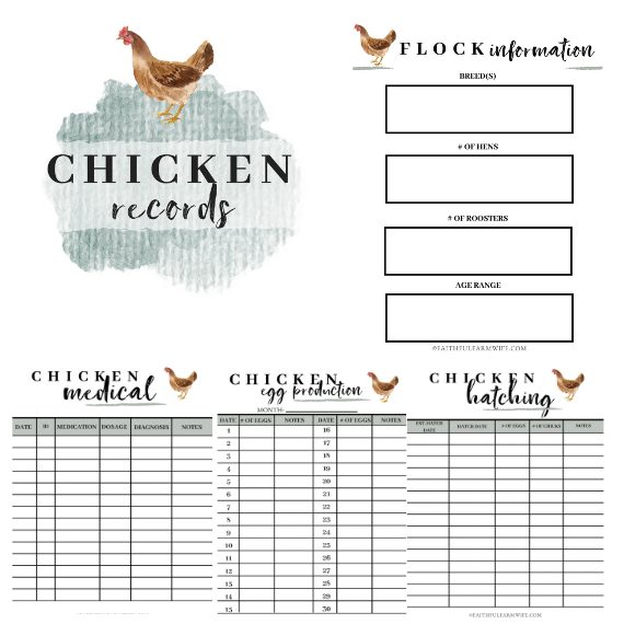 The Chicken Record Book | Mama on the Homestead