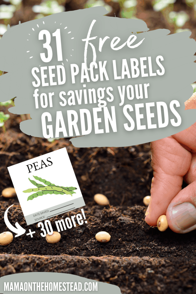 Image of a person planting seeds. Words: 31 FREE Seed Pack Labels for saving your garden seeds. Pin Image