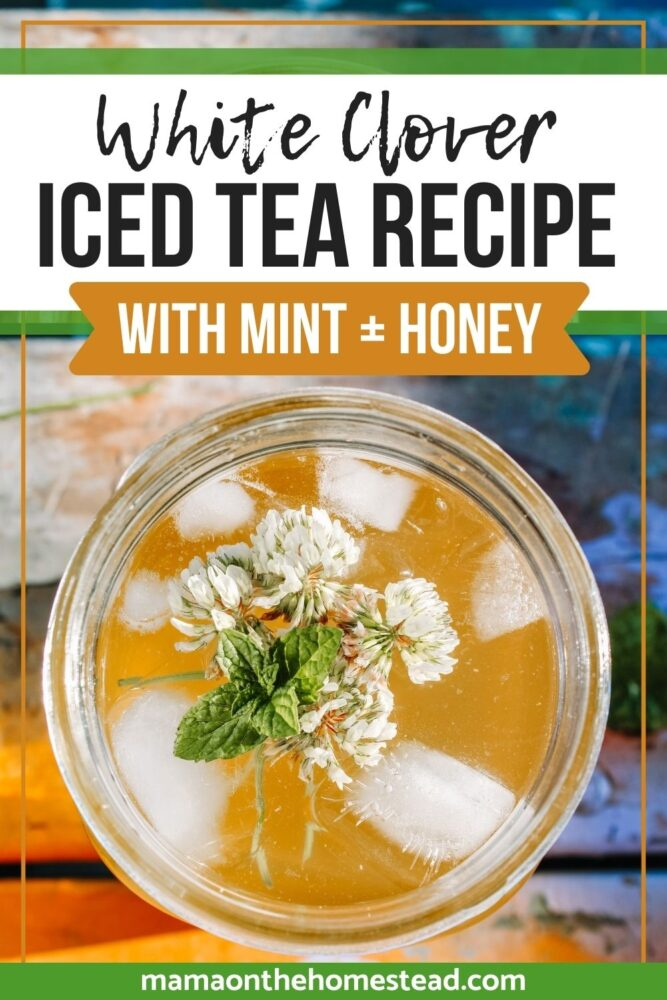 Image of iced tea with mint, clover, and honey in a mason jar. Words:White Clover Iced Tea Recipe with Mint + Honey | Mama on the Homestead