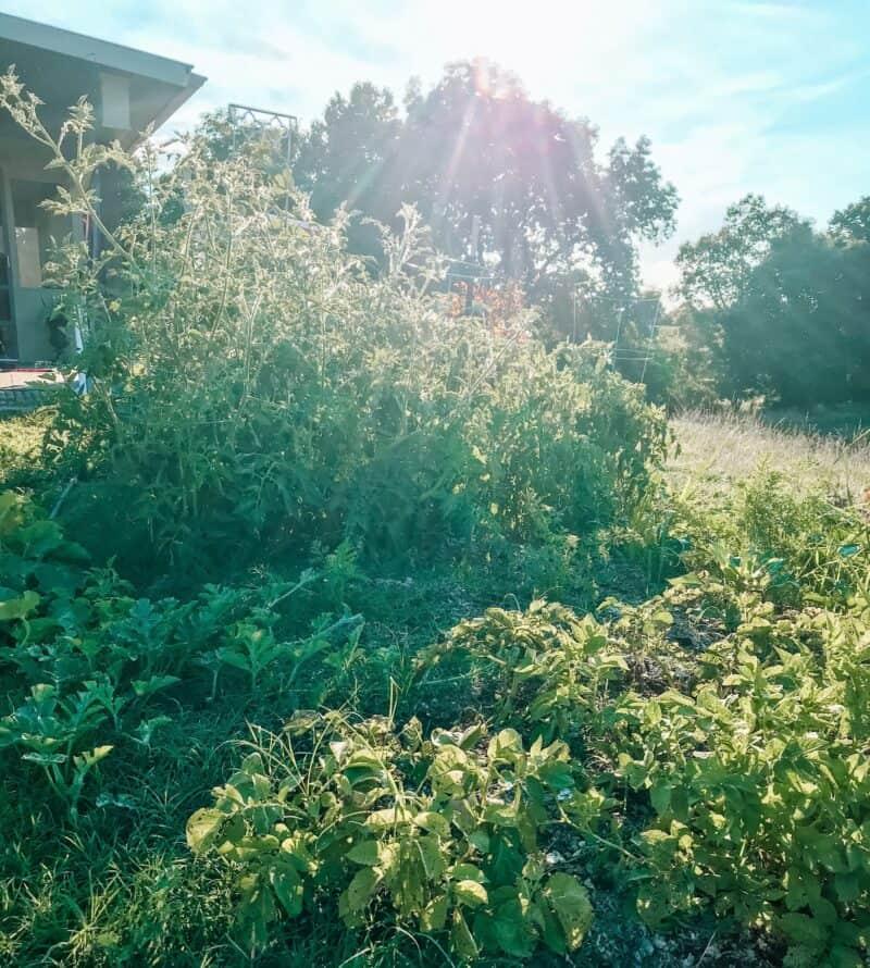Back to Eden Garden | 20+ Helpful Beginner Gardening Tips & Resources | Faithful Farmwife