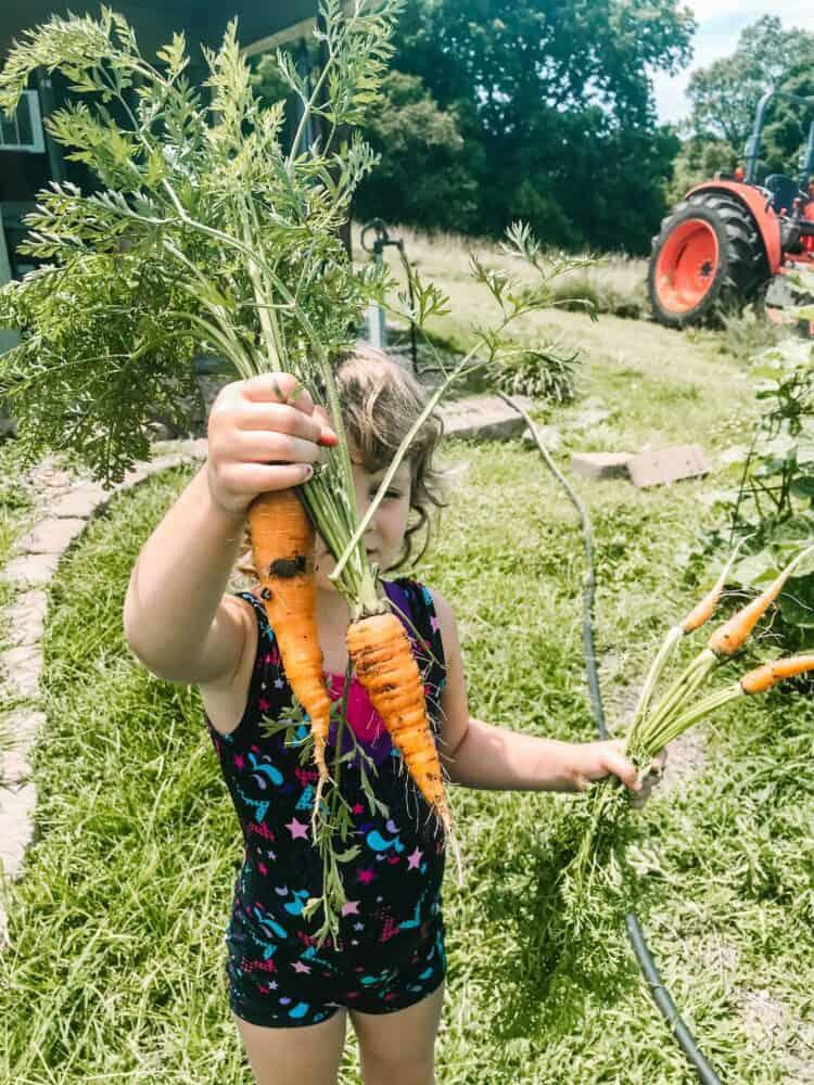 Carrots | 20+ Helpful Beginner Gardening Tips & Resources | Faithful Farmwife