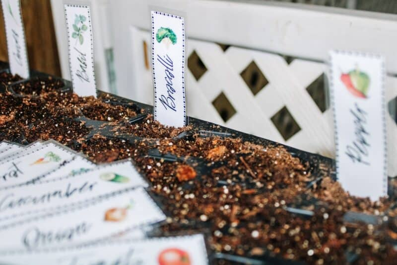 Image of seed starting tray filled with soil. Laminated garden markers from Mama on the Homestead are used at the top of each column in the tray.