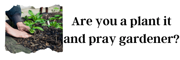 Are you a plant it and pray gardener?