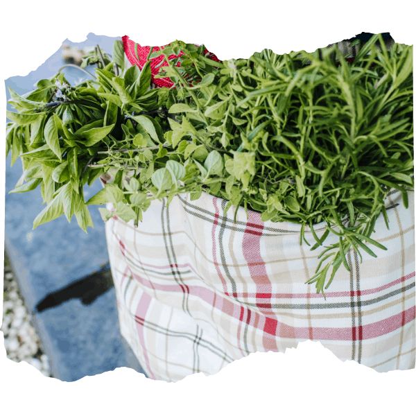 Gathering apron filled with herbs | 9 of the Best Gardening Projects for Kids