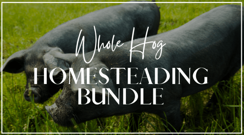 Featured in The Whole Hog Homesteading Bundle