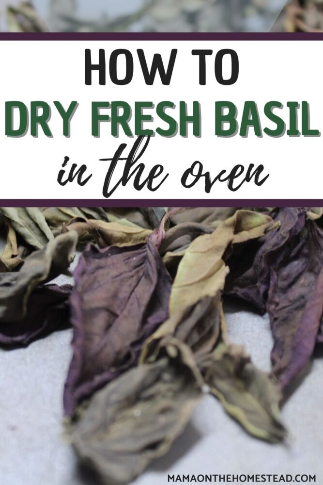Image of dried basil (green and purple) Words: How to Dry Fresh Basil in the Oven  | Mama on the Homestead