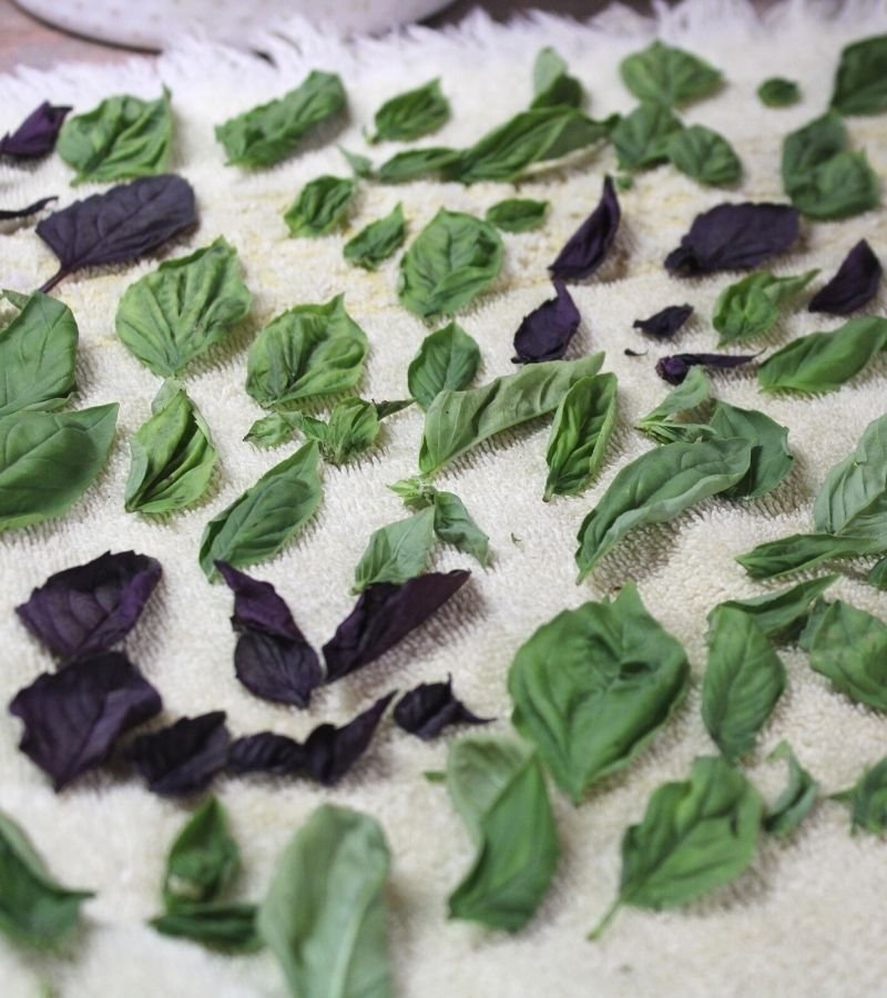 Image of Basil leaves drying on a kitchen towel | Mama on the Homestead